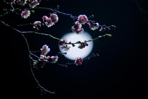 beautifull moon