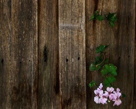 Wallpaper__Lonely_Fence_Flower_by_zappel