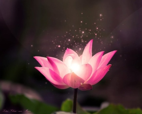 beautiful-flower-nature-favim-com-456475